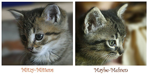 Mitzy-mittens