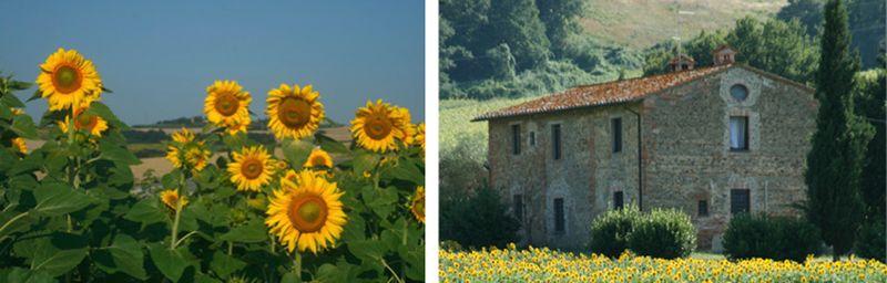 Sunflowersx2