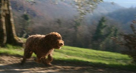 Runningdog_2